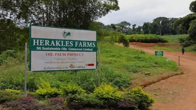 Herakles Farms Affair: Nguti Chiefs have addressed a letter to President Biya