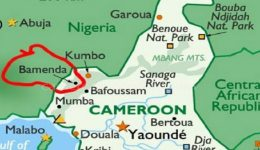 Southern Cameroons Crisis: Medical doctor shot in Bamenda