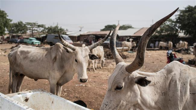 Nigeria: Cattle thieves kill at least 10