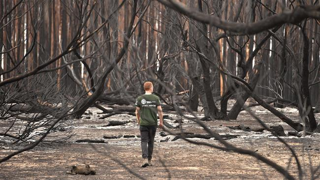 Australia: Relief as rain falls over bush fires