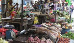 Gabon: Pangolin sales plunge over coronavirus fears