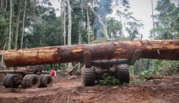 Cameroonian company illegally razing forest