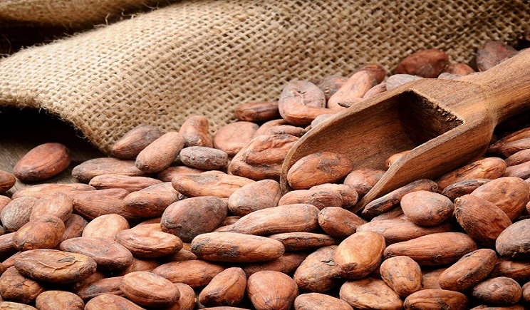 Cameroon seeks to increase Cocoa and Coffee production