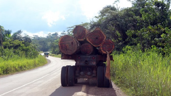 Cameroon makes public a 58 page document on timber exploitation in the country