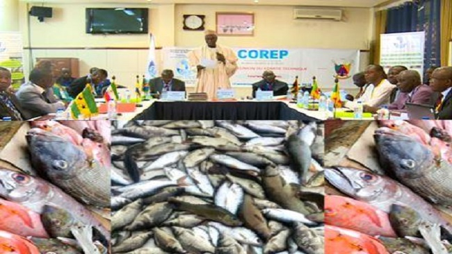 Yaounde: Forum on fishing in the Gulf of Guinea opens