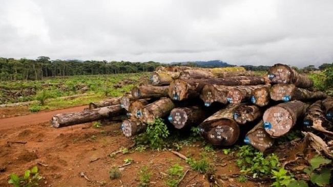 Southern Cameroons: Timber protest rocks Nguti