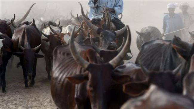 Nigeria: Suspected herdsmen kill 20 farmers