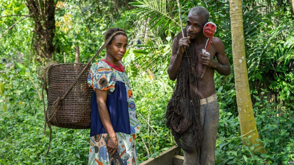 La Republique: Pygmies Protest Destruction of Forest Resources