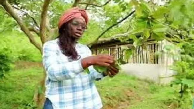 Cameroon researcher invents groundbreaking pesticide to fight malaria