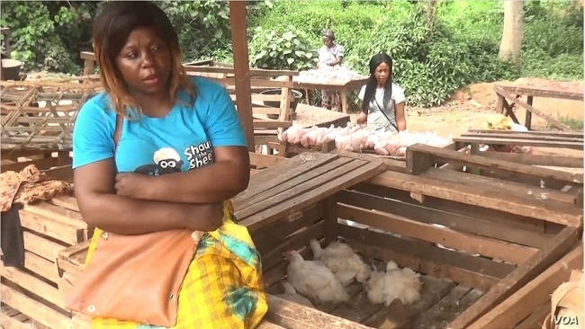 Yaoundé: Poultry Farmers Urge Europe to Ease Trade Restrictions